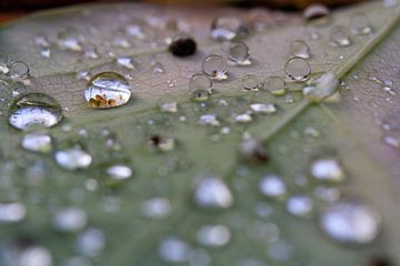 Druppels op een herfstblad van