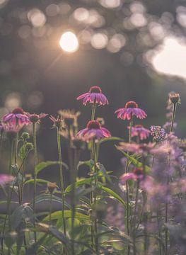 Blumen Teil 178