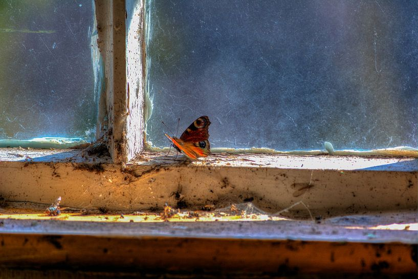 Vlinder van Maikel Brands