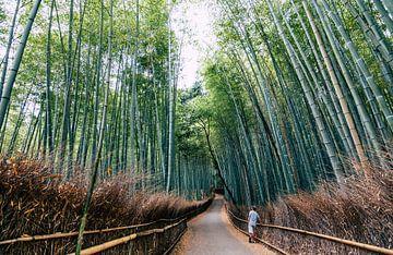 Der wunderschöne Bambuswald in Kyoto (Japan). von Claudio Duarte