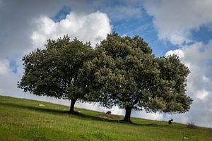 Bomen op een helling van