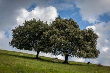 Bomen op een helling von Evelien Buynsters