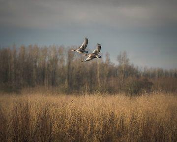 Wasservogeljagd von Jan Hermsen