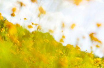 Een impressionisme, Monet stijl beeld van een weiland gele, oranje, rode bloemen.  Opgelaten, optimi van John Quendag