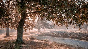 nebliger Sonnenaufgang hinter Bäumen entlang einen Fußweges bei Hatertse Vennen von Michel Seelen