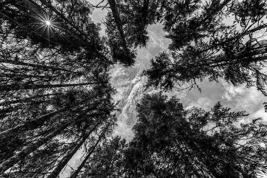 Reuzen in het bos(zwart wit) van Richard Driessen