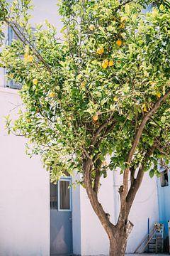 Citroenboom in Griekenland van Patrycja Polechonska