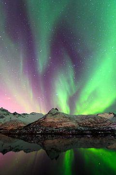 Nordlichter, Polarlicht oder Aurora Borealis im nächtlichen Himmel über den Lofoten Inseln in Nord-N