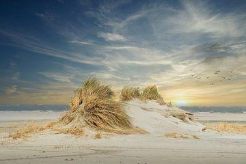 Neue Dünenformation am Strand von Ameland. von Gert van Santen