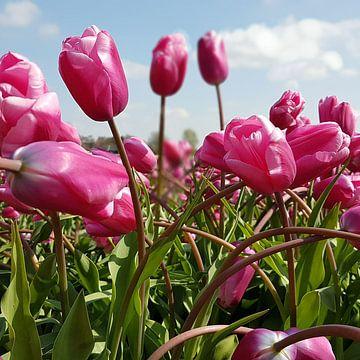 Tulpen van Ton van Waard - Pro-Moois