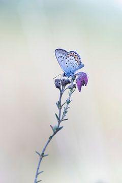 Schmetterling. von Francis Dost