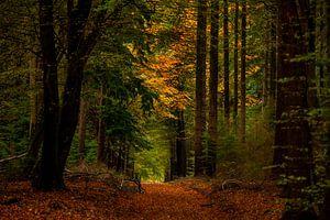 Herfst in het bos van Marc Smits