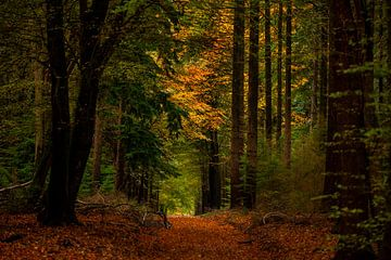 Der Herbst im Wald von Marc Smits