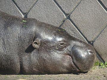 Nijlpaard van Sanne Compeer