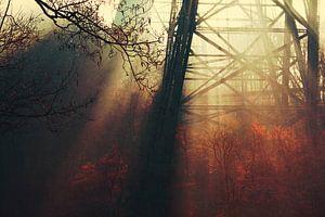 Licht und Schatten von Dirk Wüstenhagen