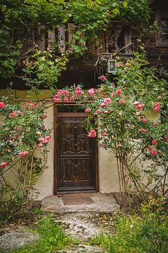 Rosen am Haus von Thilo Wagner