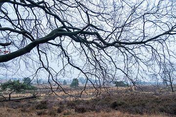 Tak op de voorgrond voor een heidelandschap op de Veluwe. van Idema Media