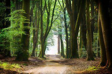 Een rustgevend pad door het bos von Rigo Meens