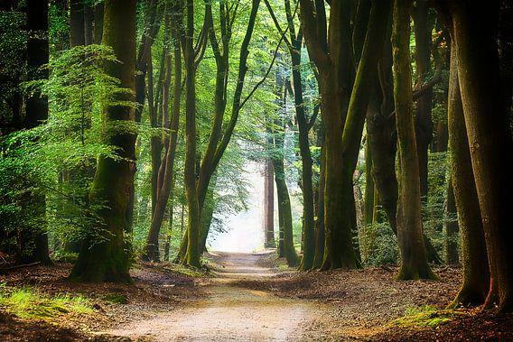 Een rustgevend pad door het bos van Rigo Meens