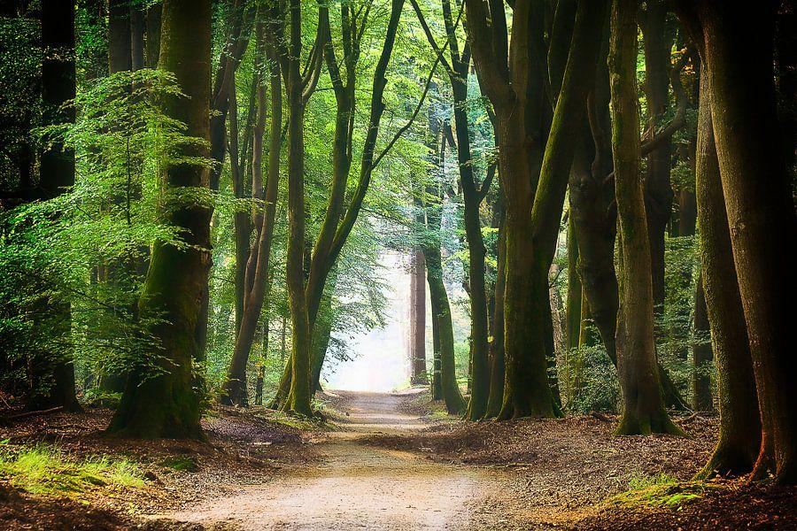 Een rustgevend pad door het bos