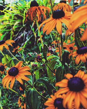 Bloemen van Lavieren Photography
