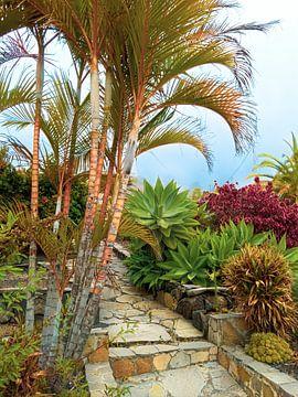 La nature à La Isla Bonita sur Stoka Stolk