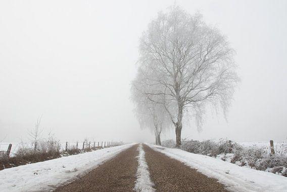 Boom in mistig winter landschap