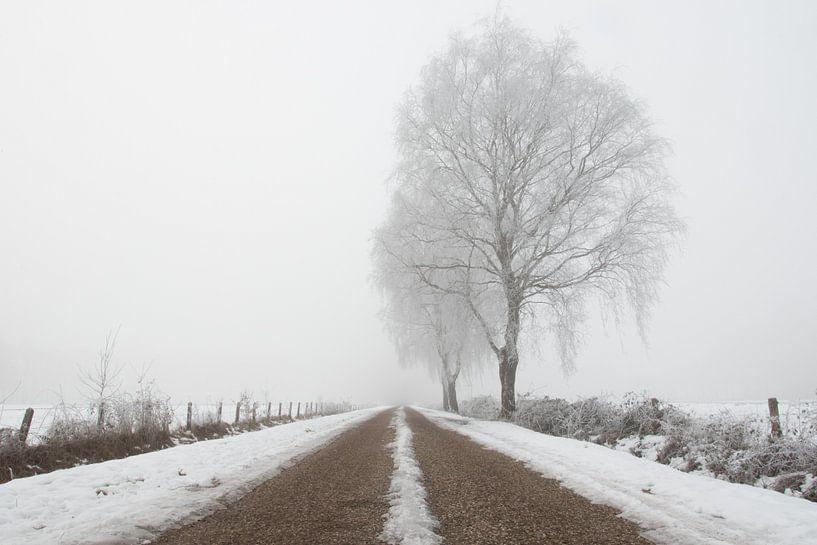 Boom in mistig winter landschap van Art Wittingen