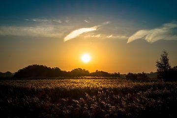 zonsopgang boven rietvelden van Peter Bouwknegt