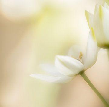 Weiße Blume von Hennie Zeij