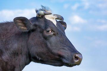 Porträt Kopf der schwarzen europäischen Kuh und des blauen Himmels von Ben Schonewille