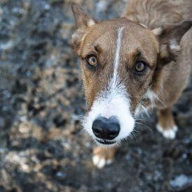 Cher chien sur Norbert Sülzner