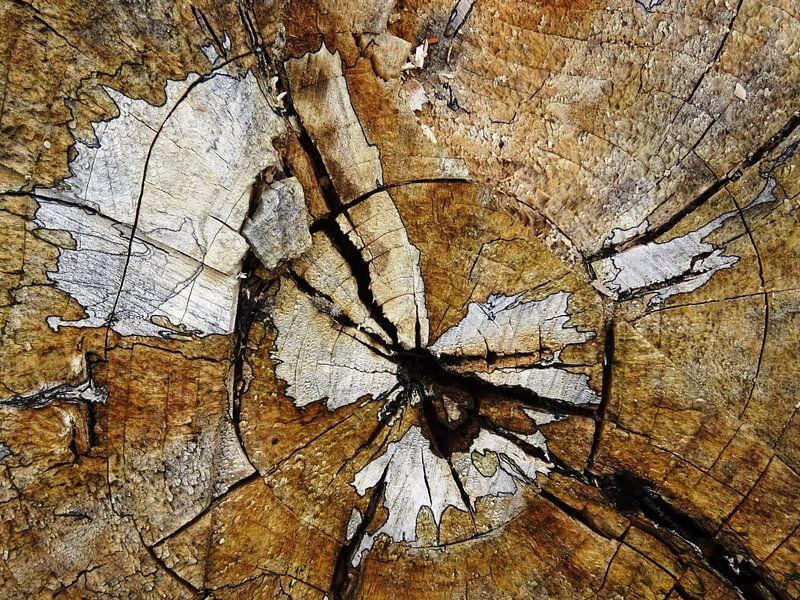 TreeScape 03 van MoArt (Maurice Heuts)