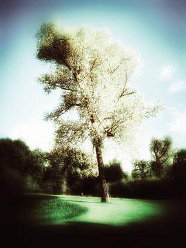 Berkenboom uitgelicht van Elo Mars