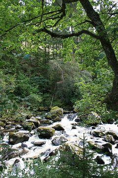 Rivier in het bos van Floortje Mink