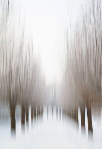 Winter - Wilgen - Park von Vandain Fotografie