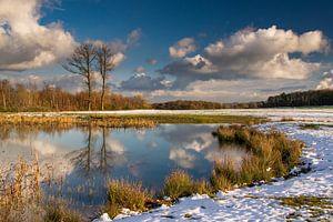 reflections at the lake