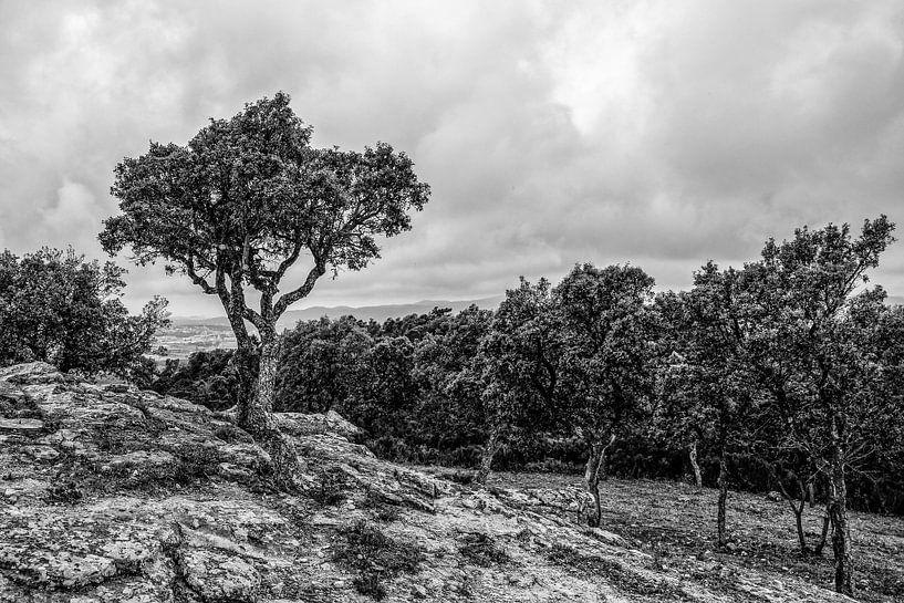 Tree van Wessel Krul