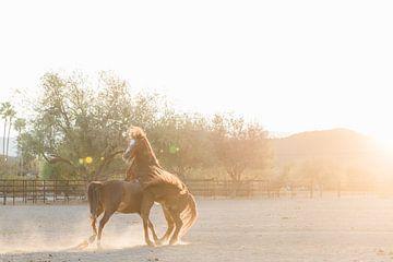 Pferde bei Sonnenaufgang spielen von Anouschka Rokebrand