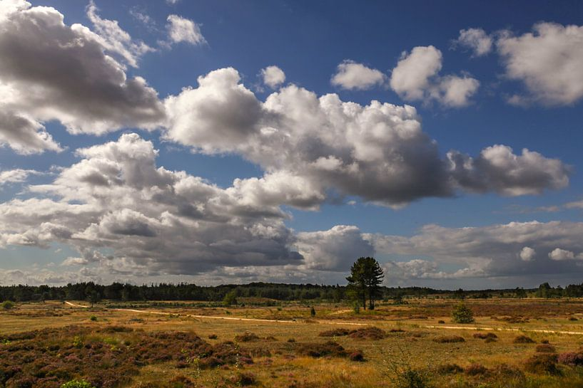 Nationaal Park Hoge Veluwe van Elly Damen
