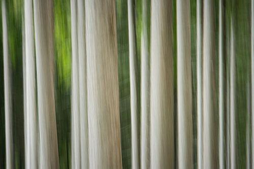 """Abstract """"Bomen"""""""
