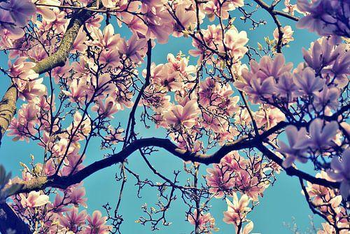 Magnolia pastell dreams