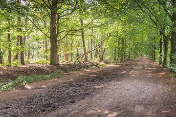 Sandweg in einem holländischen Wald von Ruud Morijn