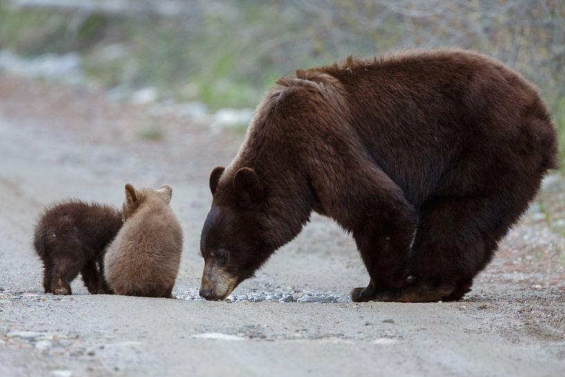 Moeder beer en twee kleintjes van Menno Schaefer
