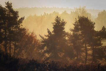 Molenberg ochtendgloed van Joris Pannemans - Loris Photography