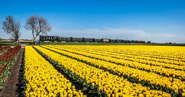 Stoomtrein langs geel tulpenveld van Peter Heins
