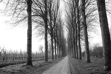 Zwart wit landschap Holland von Jurgen den Uijl
