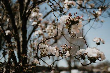 Blüte von Sanne van Pinxten