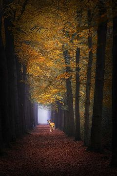 Herfst droom . van Saskia Dingemans