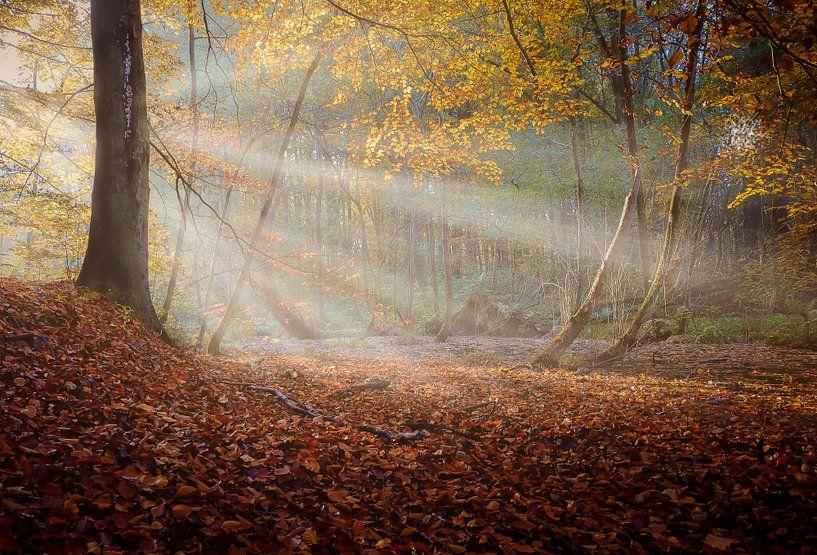 Zonnestralen in nevelig herfstbos van Martin Bredewold